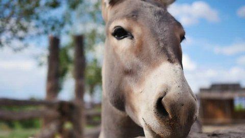 Donkey face close-up