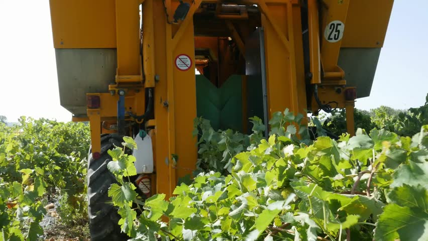 behind back view of harvester machine in vineyard during harvest seanson