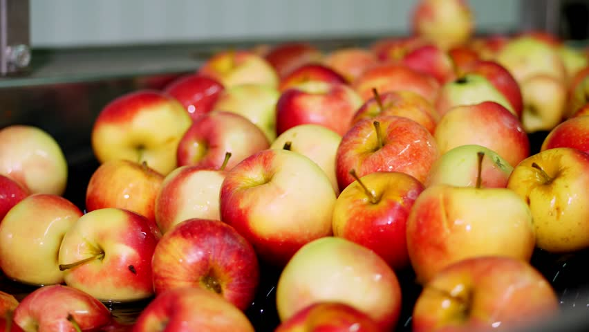 fresh picked apple harvest. The process of washing apples in a fruit production plant, Special bath, packing tub at fruit warehouse. Sorting apples at the factory. food industry