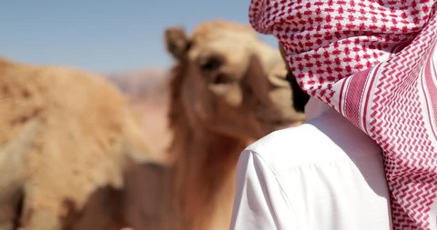 Bedouin man with his camels, Weaving yarns from camels' wool, a process in which fibers are woven into threads. Jordan, Wadi Rum Desert