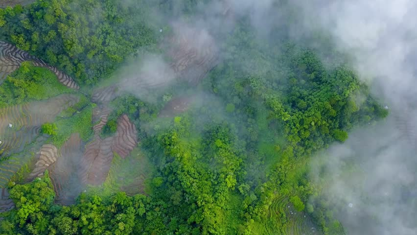 Drone shot straight down aerial jungle mountain forest and rice fields / Drone shot straight down aerial jungle mountain forest and rice fields with clouds in beautiful green Flores - Indonesia