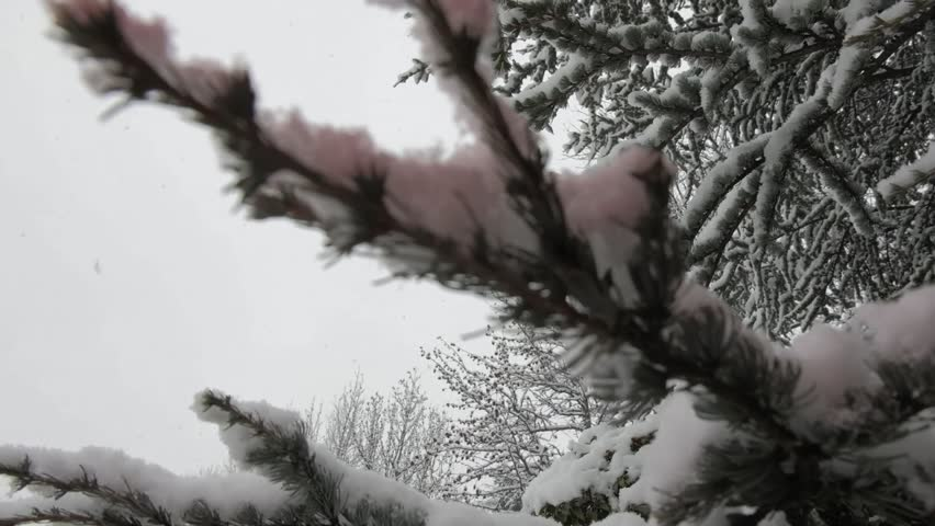 Trees covered with snow in aosta valley   Shutterstock HD Video #1018215523
