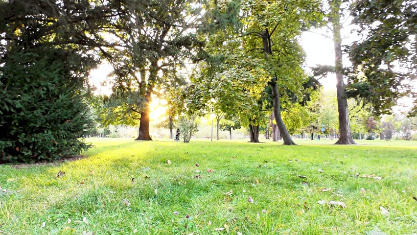 Autumn in the Park, Trees and Grass | Shutterstock HD Video #1018235833