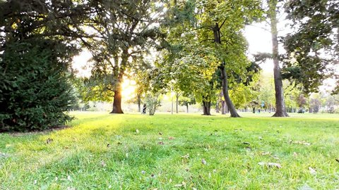 Autumn in the Park, Trees and Grass