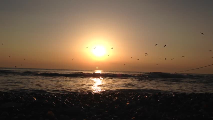 Sunset on the sea and birds circling | Shutterstock HD Video #1018353643