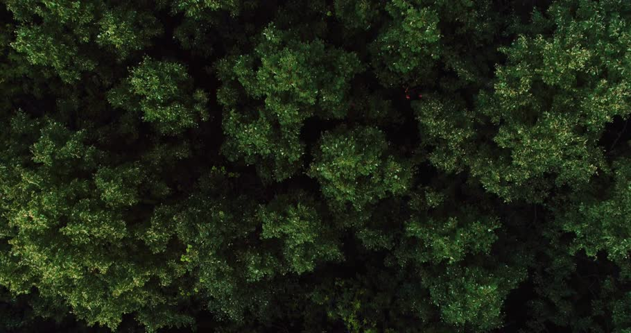AERIAL TOP DOWN: Dense deciduous mixed evening fresh green forest of central Europe at summer cloudy day - Aerial View | Shutterstock HD Video #1018942813