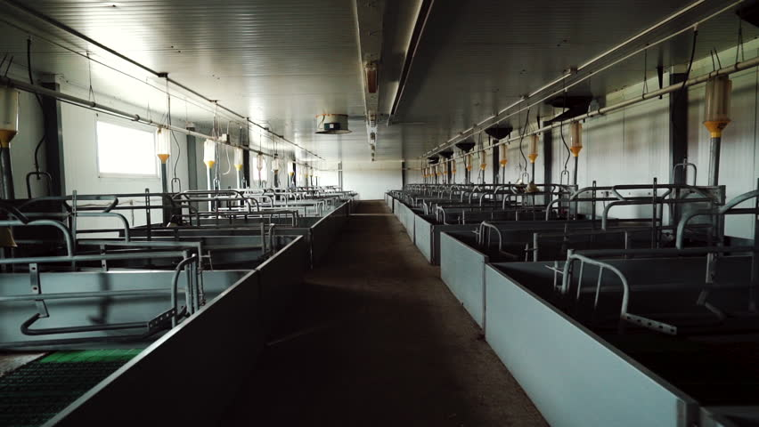 Maternity room is in empty modern industrial pig farm | Shutterstock HD Video #1019244313