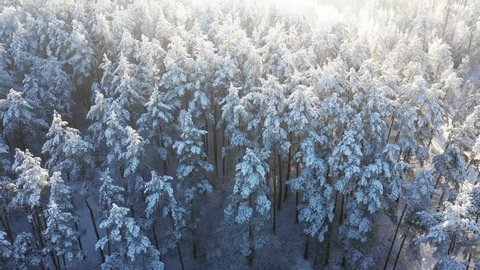 winter, aerial, forest, view, snowy, snow, woods, nature, landscape, tree, top, above, white, cold, high, scenic, beautiful, frost, background, christmas, scene, blue, beauty, sky, belarus, frozen, wo