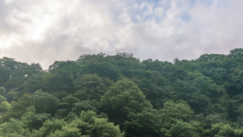Timelapse with tilt up motion of vibrant cloudscape over rush forest in Hakone, Japan | Shutterstock HD Video #1020042463