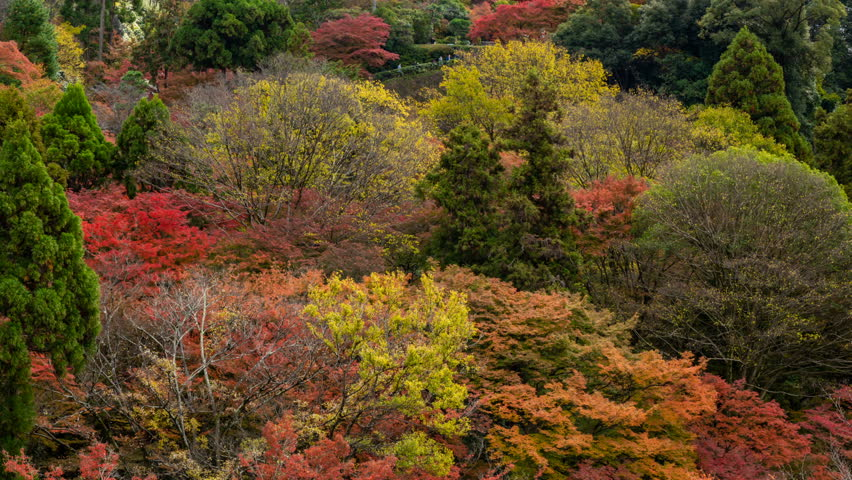 Timelapse with tilt up motion of a historic pagoda among colorful fall foliage near Kiyomizu Temple in Kyoto, Japan | Shutterstock HD Video #1020049183
