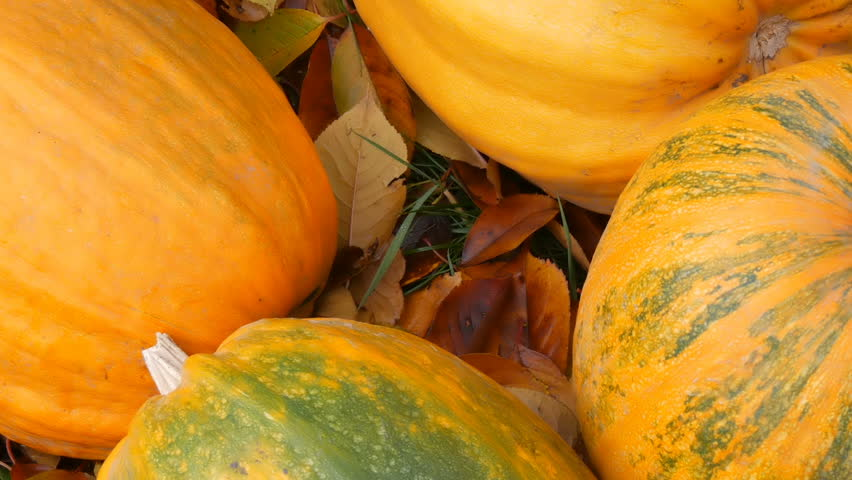 Huge orange pumpkins stand near the fallen autumn leaves. Autumn harvest of pumpkins and Halloween | Shutterstock HD Video #1020198973