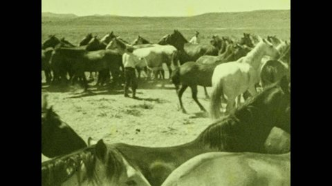 1930s: UNITED STATES: man rounds up horses. Man with whip. Cowboy with lasso.