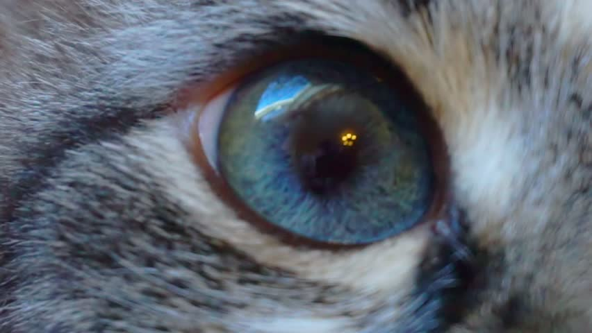 blue cat's eye close up #1020374923