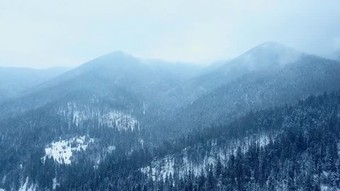 Aerial of snowfall above hills covered with pine evergreen woods. Winter snow fall in the fir tree spruce forest. Snowflakes swirl in the air above mountains. Drone shot of snowy weather precipitation