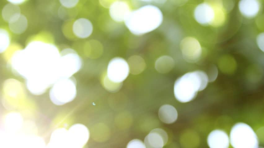 Defocus, nature background. | Shutterstock HD Video #1020894073