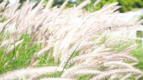 Beautiful grass flower