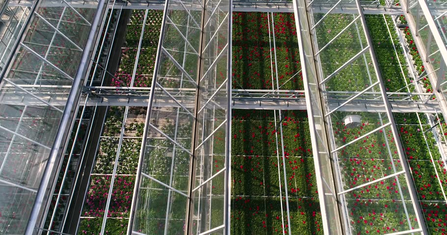 Flying over a large greenhouse with flowers, a greenhouse with a retractable roof, a greenhouse view from above, growing flowers. Large industrial greenhouses | Shutterstock HD Video #1021243873