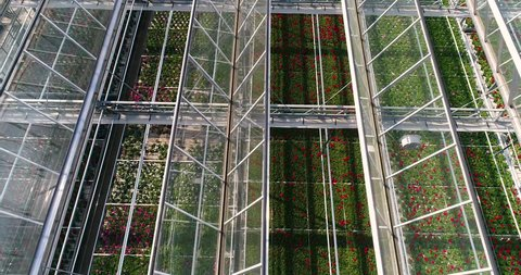 Flying over a large greenhouse with flowers, a greenhouse with a retractable roof, a greenhouse view from above, growing flowers. Large industrial greenhouses