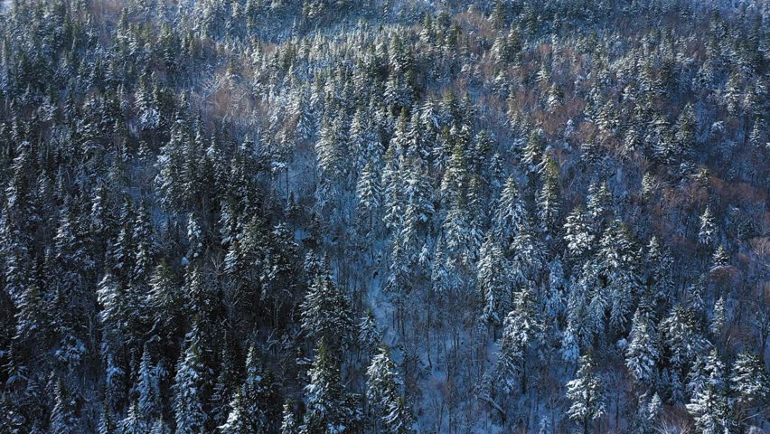 Aerial footage flying up the slope of a snowy mountain looking down at the snow covered trees