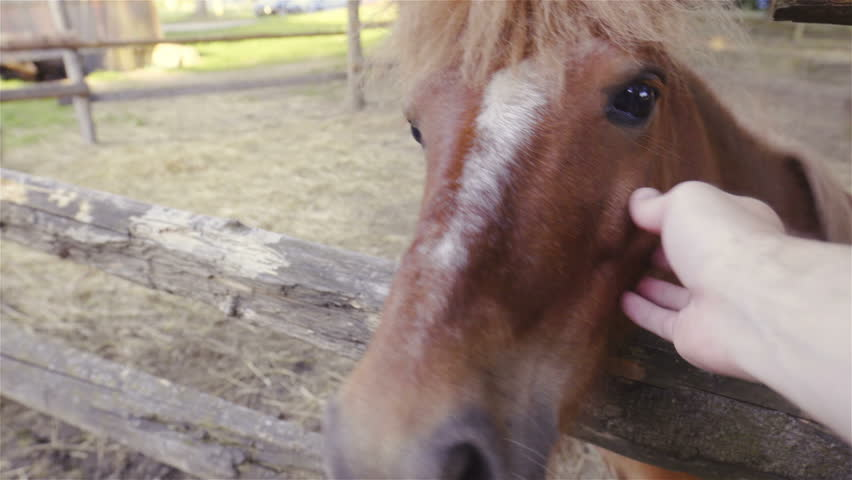 Patting cute brown pony first person view HD. POV of person hand in focus caressing brown pony behind the wooden fence. | Shutterstock HD Video #1021378633