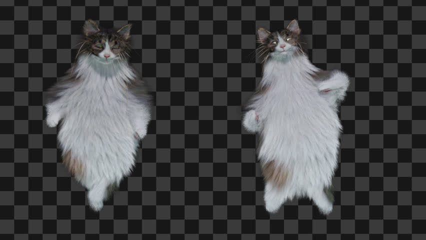cat CG fur 3d rendering animal realistic CGI VFX Animation  Loop alpha dance composition 3d mapping