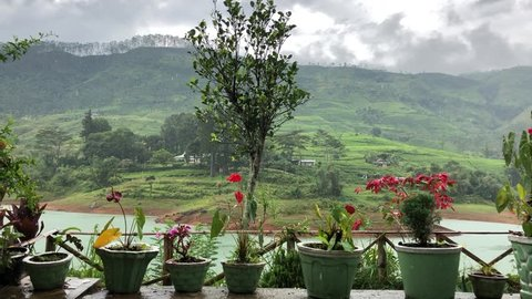 View on garden anthurium in pots, river and green hills on rainy day. Full HD 60 fps.