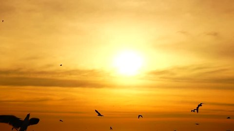 HD 1080p super slow seagulls fly beautiful full sunset sunlight sky beach background travel tourist.