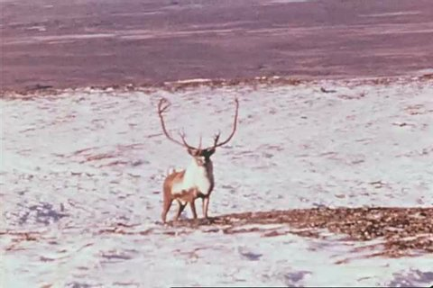 CIRCA 1976 - Aerial shots show off Alaska's dramatic landscape while a narrator shares stats about the state.