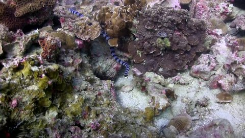 Filmed with Canon HF G20 camera in Gates Underwater housing on Koh Tao/Thailand. 1080 HD