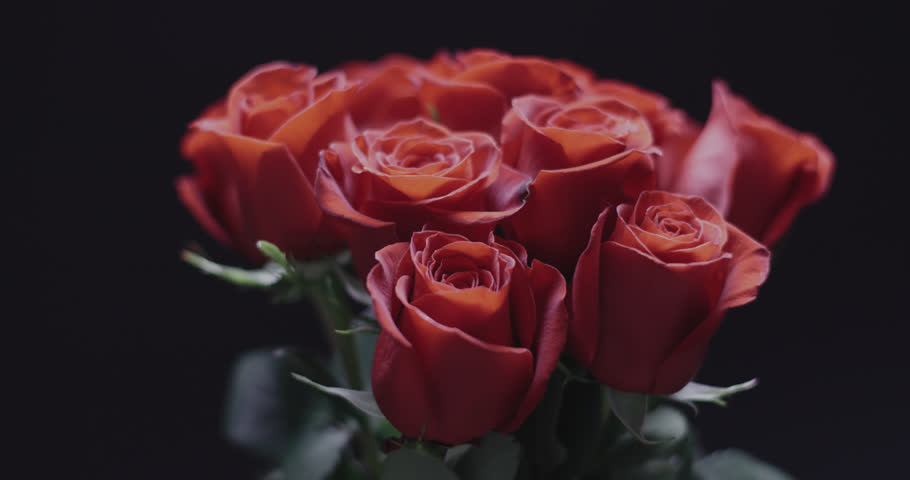 Bouquet of Roses on black background with subtle camera movement.  | Shutterstock HD Video #1022454673