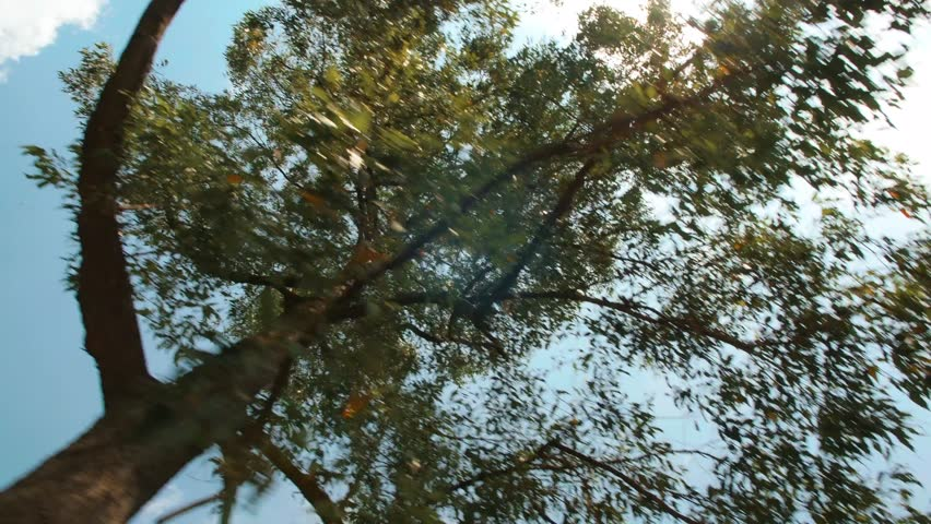 Green Forest Trees Against Blue Sky and Summer Sun. Looking Up From Car Window. 4K Slowmotion Motion Shot. Bali, Indonesia.