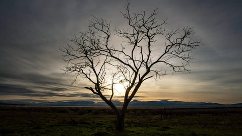 Time lapse of tree silhouetted agains the sky as the sun sets and clouds move through the sky.