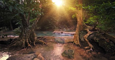 Sunlight in paradise forest. Beautiful jungle nature