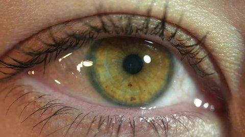 Woman's eye iris contracting. Pupil contracts macro shot