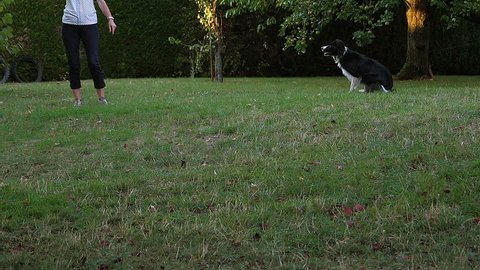 Woman with Border Collie Dog walking on Grass, Playing Ball, Slow motion