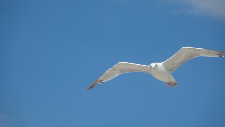 Gull in the sky. Slow Motion | Shutterstock HD Video #1023820723
