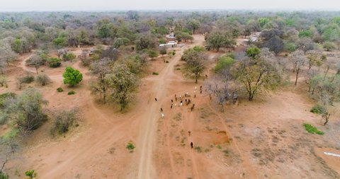 4K aerial view of a rural village with cattle roaming free, Mahenye Village, Zimbabwe
