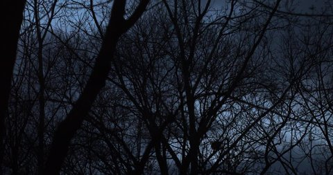 Dark Trees Silhouetted Against a Cold Fall Sky