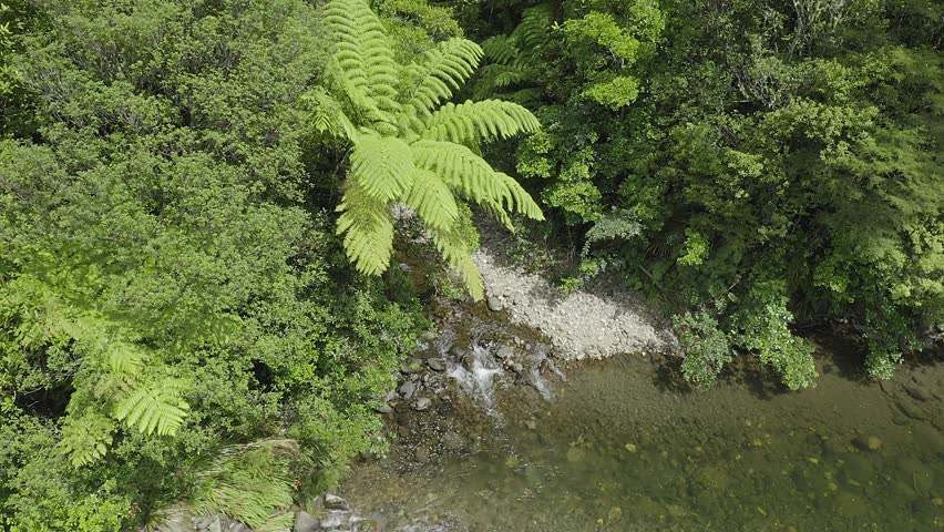Aerial: Tropical fern tree and trickling river in a native forest. Coromandel Peninsula, New Zealand    Shutterstock HD Video #1024380953