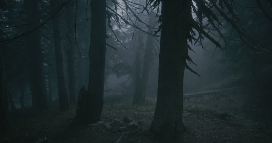 Sinister pine wood covered with curvy roots and high trees in the Carpathians | Shutterstock HD Video #1025193653