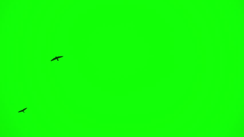 green screen with flying black ravens #1025543873