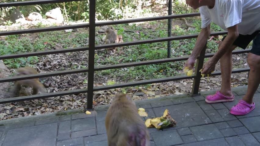 Young beautiful girl traveler feeds elephant banana | Shutterstock HD Video #1025955863