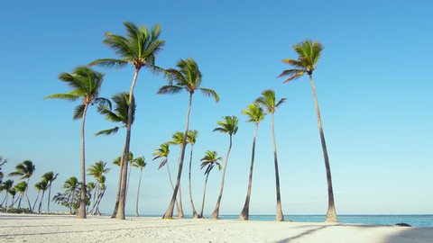 Tropical beach white sand, blue Caribbean sea and toll palm trees. Vacation on paradise island / Palms isolated on the Atlantic ocean. Beach and sea and sky. Sunset in the beautiful beach.