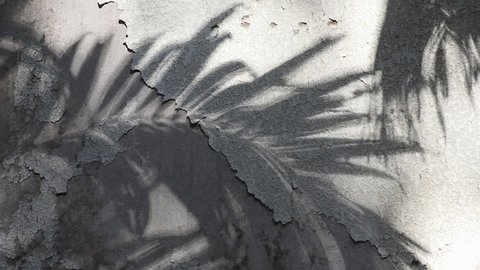 Manila palm tree shadows reflected on the old concrete wall coated with peeled textured paint
