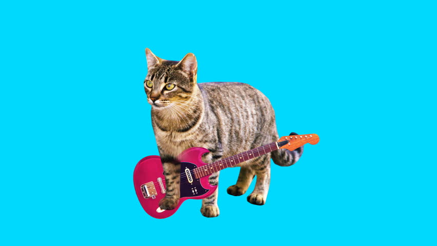 Animation minimal gif art. Kitty playing guitar