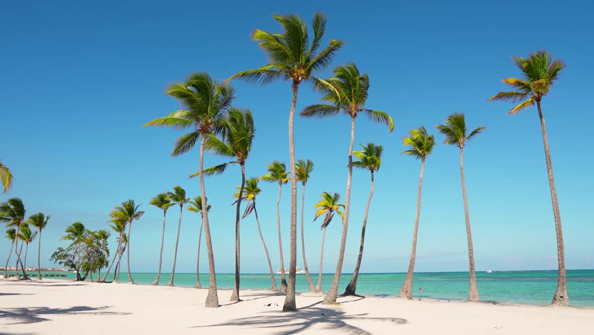 Island beaches palms and sea. Atlantic ocean and sky / Beautiful white wild beach. The best beach in the world. Wildlife Island. Isolated beach and blue ocean. Caribbean turquoise sea water #1026530453