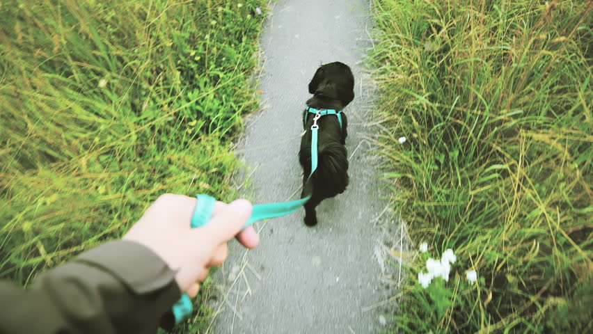 Taking a dog for a walk POV. Person view of a small black dog in focus walking on a narrow path with grass on both sides. | Shutterstock HD Video #1026688793