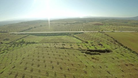 Olive Grove in Portugal