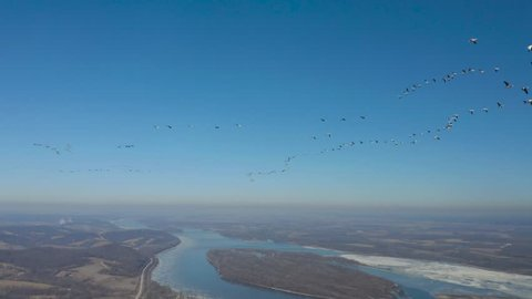Rare footage of massive snow goose migration headed back to breeding grounds. 4K footage at high bit rate.