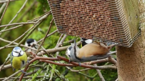 European nuthatch, blue tits, great tits and coals tits feeding on a wooden bird feeder.